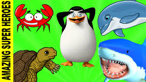 sea animal names u0026 birds finger family learning rhymes for