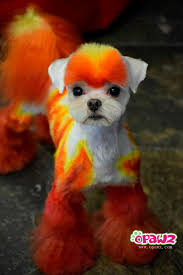 joypia yorkshire haircuts so nice color opawz permanent hair dye ardent orange dog