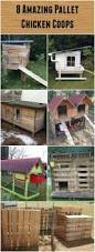 best 25 urban chicken coop ideas on pinterest urban chickens