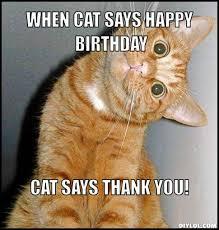 Funny Memes Cats - funny cat happy birthday memes trolls cat birthday memes