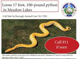 17 foot python lost in valley still not found anchorage daily news