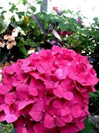Landscape Nurseries Near Me by The Best Nurseries And Garden Centers In Charlotte