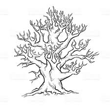 White Oak Tree Drawing Big Old Tree Freehand Drawing Stock Vector Art 92734247 Istock