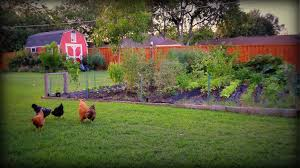 vegetable garden time for fall gardening youtube