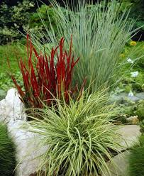 gorgeous grasses collection 5 different ornamental grasses