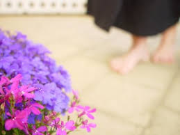 Blue And Purple Flowers Free Picture Blue Purple Flowers Unfocused Purple Flowers