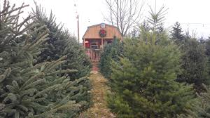 where to get a real christmas tree around kalamazoo kzookids