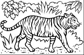 coloring page tiger paw coloring pages of tiger coloring pages of tigers medium size of