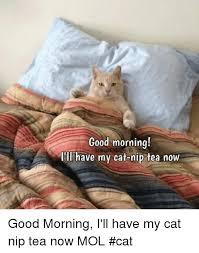 Good Morning Cat Meme - good morning animal magic ill ave my cat nip tea now good morning i