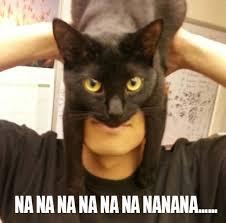 Cat Beard Meme - hat cat is batman bo hip cat tastic pinterest cat and animal