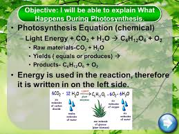 What Happens During The Light Reactions Of Photosynthesis I Will Be Able To Explain What Photosynthesis Is Explain What