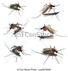 kasten ältest wanzen auf haus stockfoto bild kasten moskitos bilder und stockfotos 1 405 moskitos fotografie und