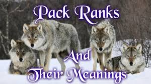 pack ranks and their meanings