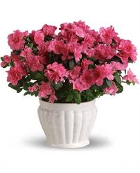 Best Flowers For Weddings Potted Flowers For Wedding Best Potted Flowers Ideas