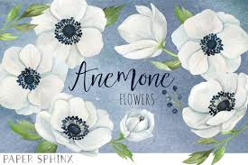 anemone flowers watercolor anemone flower pack illustrations creative market
