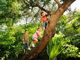 climbing a tree can improve cognitive skills researchers say