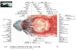 Colour Atlas Of Human Anatomy A Color Atlas Of Sectional Anatomy Of The Mouse Cosmo Bio Co Ltd