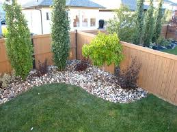 yard tree ideas front landscaping landscape around trees dma