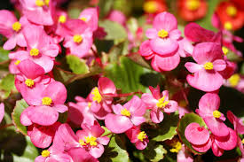 plants native to indiana 10 best flowers for central indiana engledow group