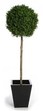 topiary trees pyramid topiary tree home decorating interior design bath