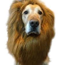 online get cheap lion costume for dogs aliexpress com alibaba group