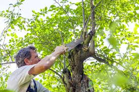 how to get affordable tree service yellowpages