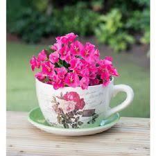 cup and saucer planter pots window boxes baskets ebay