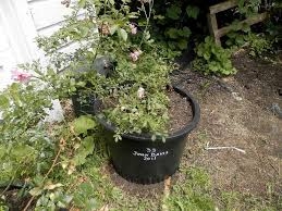 Plant Garden Ideas by Potted Plant Garden Ideas Potted Plant Ideas For Good Gardening