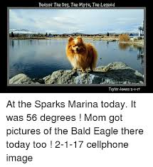 Benson Dog Meme - 25 best memes about pictures of the bald eagle pictures of the