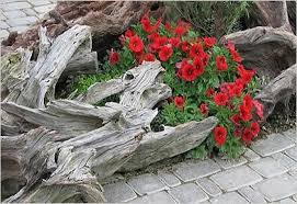 15 amazing tree stump to planter conversions garden lovers club
