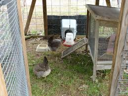 chickat u0027s page backyard chickens