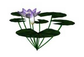 sketchup download usable for nymphaea water lily nuphar