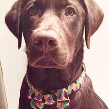 mardi gras dog collars from mardi gras masks dog collar mardi gras collars dog
