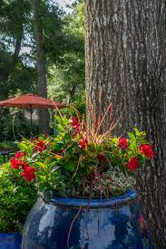 Plant Combination Ideas For Container Gardens Container Gardening Thrillers Fillers And Spillers Container