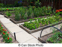 Strawberry Garden Beds Strawberry Beds Images And Stock Photos 1 430 Strawberry Beds