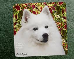 pictures of a american eskimo dog beaded eskie american eskimo dog pin pendant art jewelry