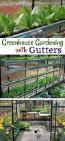 greenhouse for vegetable garden 25 unique greenhouse gardening ideas on pinterest gardening