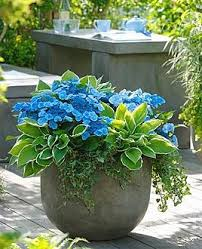 Patio Plants For Sun 8 Best Potted Pretty Images On Pinterest Gardening Container