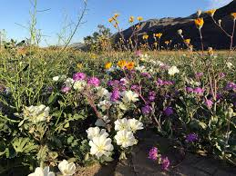 planting the seeds of innovation native plants gardening app here are a few ways to make the most of wildflower season public