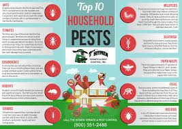 Can Bed Bugs Live In Water Top 10 Household Pests In California Hitmen Termite U0026 Pest Control