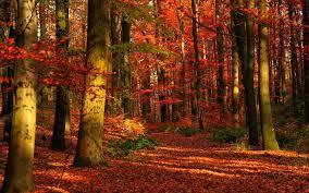 aesthetic halloween background autumn forest wallpaper for desktop pixelstalk net