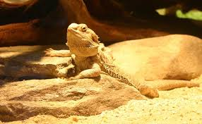 Home Decor And Accessories Bearded Dragon Reptile Cage Decor And Accessories Options