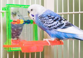 accessori per gabbie vendita di gabbie per uccelli aqva torino