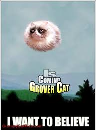 Flying Cat Meme - hover cat flying cat i want to believe grover cat grumpy cat