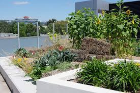 australian native edible plants urban food production growing green guide