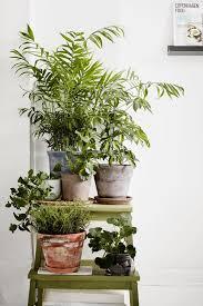 226 best houseplants images on pinterest house plants green