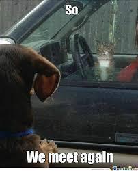 Dog Driving Meme - best 50 funny cat vs dog memes images to prove who s boss memes