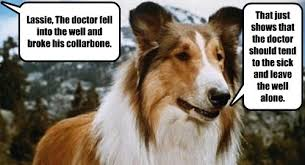 Dog Doctor Meme - lassie s here all night folks i has a hotdog dog pictures