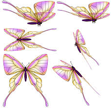 butterfly psd zip by rick lilley on deviantart
