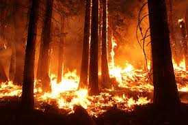 Wildfire Areas by Climate Change Vital Signs Of The Planet Study Fire Seasons